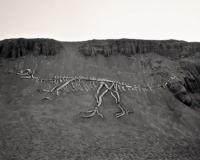 driftwood%20dinosaur_430.jpg